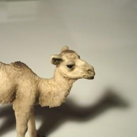 Liten kamel